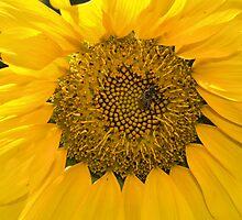 Sweet Sun by Donna Adamski