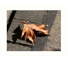 Fall Maple Leaf Art Print