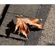 Fall Maple Leaf Photographic Print