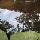 Reflections in the pond. by pinkster