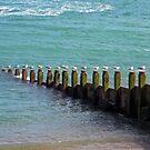 """""""Seventeen Seagulls . . Standing on the Groyne"""" by ChelseaBlue"""
