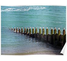 """Seventeen Seagulls . . Standing on the Groyne"" Poster"