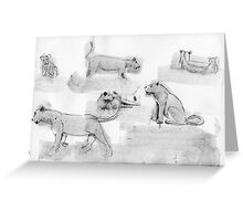 Lioness and Cubs, study Greeting Card