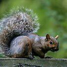 Squirrel by Jason Dymock Photography