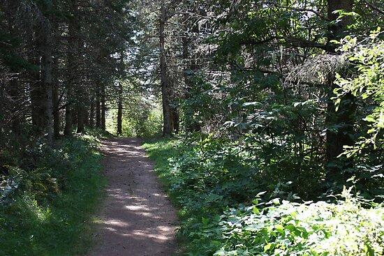Path by zahnartz