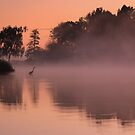 Herons in the mist by Martin Griffett