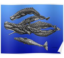 Sperm Whale Pod Poster