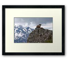 Marmot on Mountain Framed Print