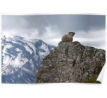 Marmot on Mountain Poster