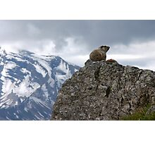 Marmot on Mountain Photographic Print