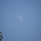The Moon On A Summers Day. Billa Barra Hill, Markfield.. Leicester. by UrsulaDee