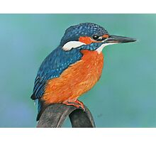 Kingfisher Photographic Print