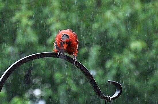 Oh Damn...It's Raining by Gayle Dolinger