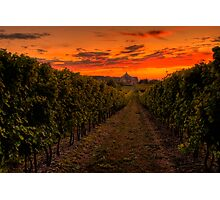 Peller Estates Winery Photographic Print