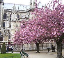 Paris in the Springtime by Christiane  Kingsley