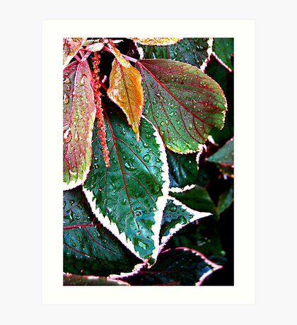 Acalypha Wilkesiana (Match Me If You Can) SOLVED in 11 guesses by Bubblehex  Art Print