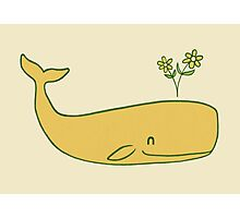 Peace Whale  Photographic Print