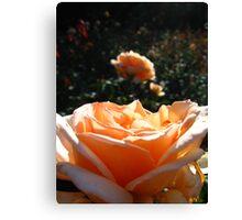 Peach Rose Canvas Print