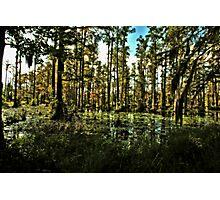 Swamp Shadows Photographic Print