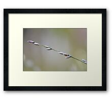 life in macro - photography by Harmonica-Leigh Framed Print