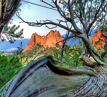 Garden of Gods / Flat Tree by Mark Bolen