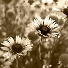 Sepia Flowers by John Fleming