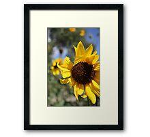 Waving Sunflower Framed Print