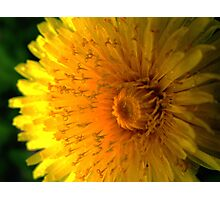 Pritty Yellow Weed Photographic Print