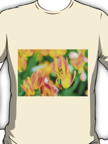 Tulips Enchanting 49 T-Shirt