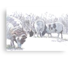 Sheep with patches of brown wool Metal Print