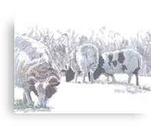 Sheep with patches of brown wool Canvas Print