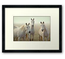 Three Whites Framed Print