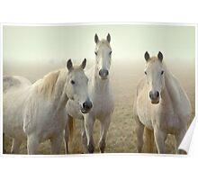 Three Whites Poster