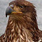 Eagle Portrait by Gail Bridger