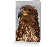 Eagle Portrait Greeting Card