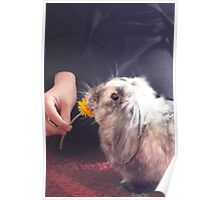 Dandelion Treat Poster