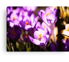 Stained glass petals Canvas Print