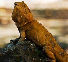 Dragon Cometh by Jason Asher