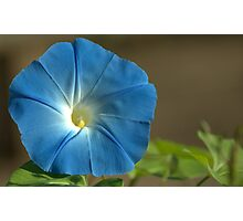 Bluer than Blue Photographic Print
