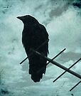 Crow by Sybille Sterk