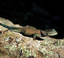 Yarrow's Spiny Lizard by Vicki Pelham