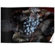 grape vine I Poster