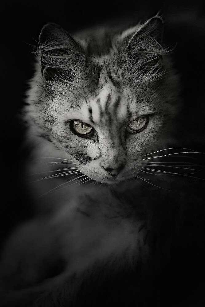 Cat by Chris Fawkes