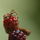 A bug on top of my raspberry... by Andrea Rapisarda