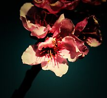 Retro Blossom (4) by catherine bosman