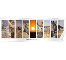 Etosha National Park - Namibia Poster