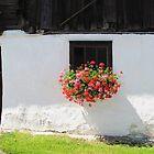 Old Barn by Christine Wilson