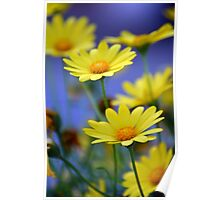 Yellow Daisies Blue Poster