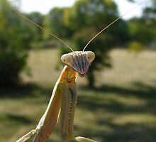 Praying Mantis by Dave & Trena Puckett
