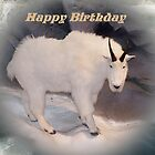 Mountain Goat Happy Birthday Card by Jonice